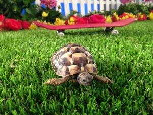 artificial grass pet