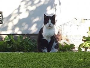 artificial grass pets